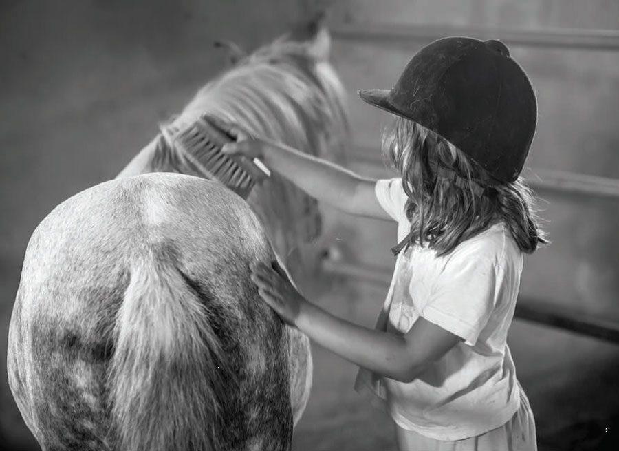 Greece's rare Skyrian horses