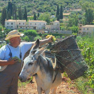 A transformative trip to celebrate the harvest season at Kinsterna