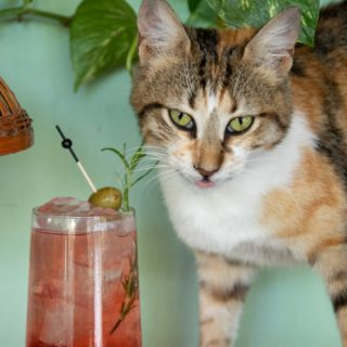 6 pet-friendly bars and restaurants in Athens
