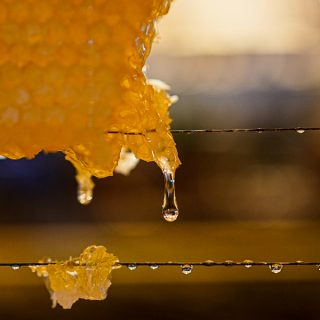 Wild and sweet: The timeless appeal of Greek honey