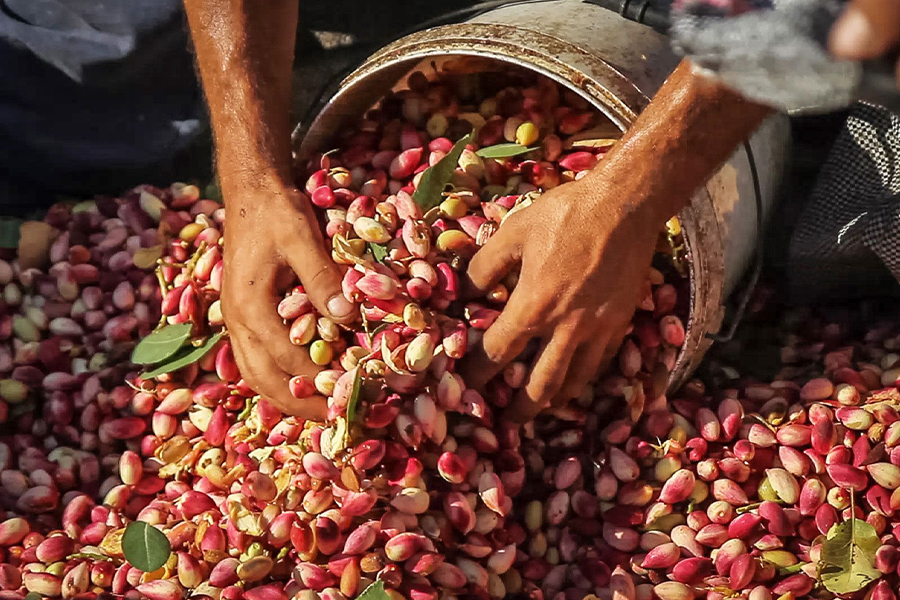 7 Super Food Festivals for Fall