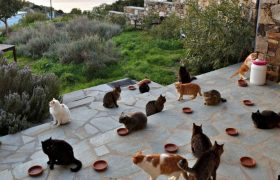 The whiskered stars of Syros on Netflix